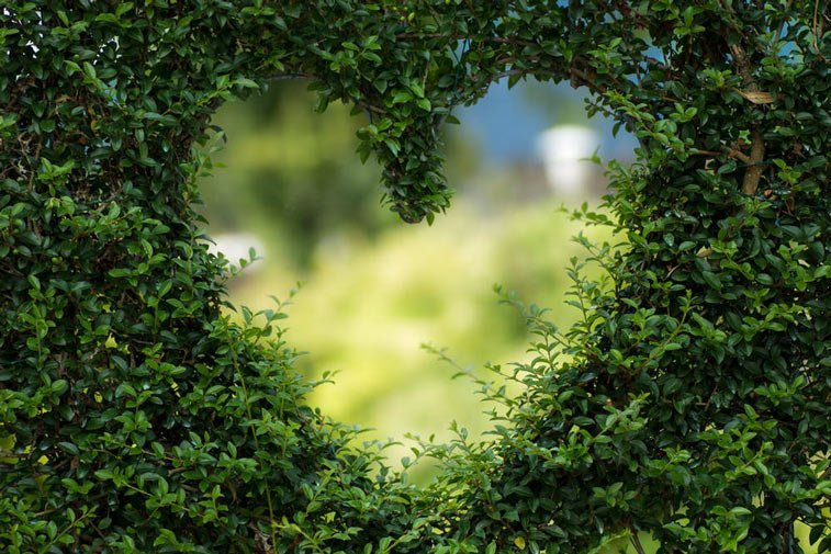 a heart trimmed out of a hedge